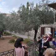 Jerozolima-Ogród Getsemani